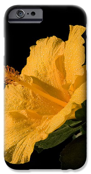 Hibiscus iPhone Cases - Yellow Hibiscus Flower Water Drops iPhone Case by Keith Webber Jr