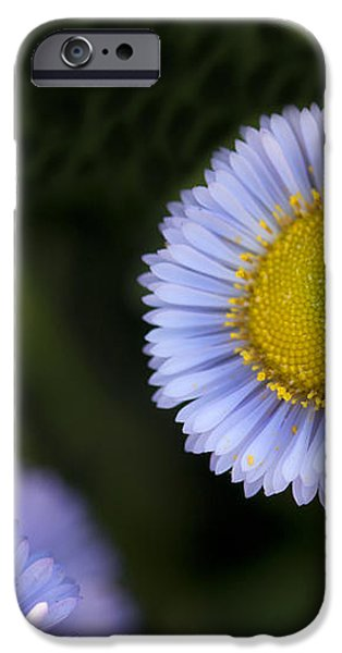 Yellow in the Middle iPhone Case by Artist and Photographer Laura Wrede