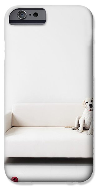 Cute Puppy iPhone Cases - Yellow lab in a white room iPhone Case by Diane Diederich