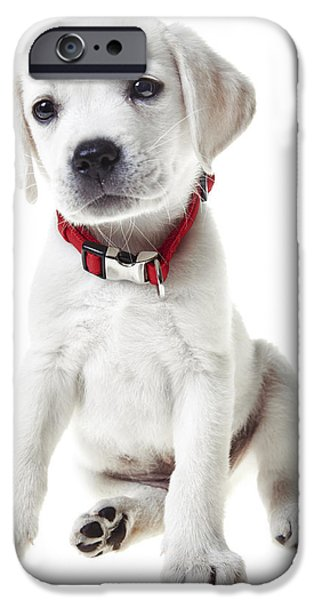Cute Puppy iPhone Cases - Yellow Lab Puppy iPhone Case by Diane Diederich