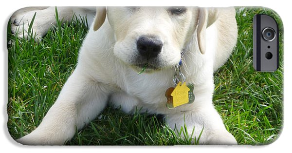 Puppies iPhone Cases - Yellow Lab Puppy Got A Ball iPhone Case by Irina Sztukowski