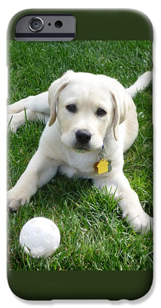 Puppy Iphone Case iPhone Cases - Yellow Lab Puppy Got A Ball iPhone Case by Irina Sztukowski