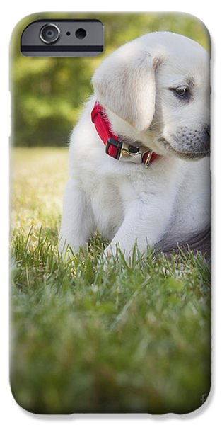 One Animal iPhone Cases - Yellow lab puppy in the grass iPhone Case by Diane Diederich