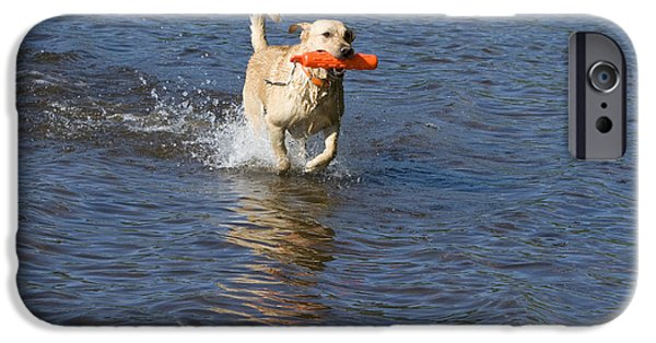 Water Retrieve iPhone Cases - Yellow Lab Retrieving Toy iPhone Case by Linda Freshwaters Arndt