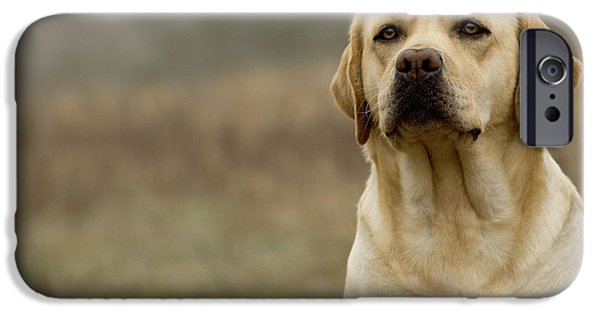 Dog Close-up iPhone Cases - Yellow Labrador iPhone Case by Jean-Michel Labat