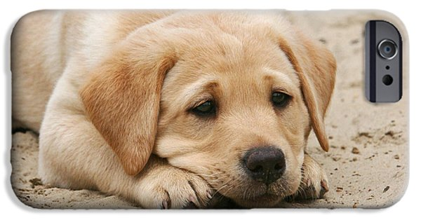 Dog Photos iPhone Cases - Yellow Labrador Retriever puppy lying head down in sand iPhone Case by Dog Photos