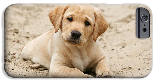 Dog Photos iPhone Cases - Yellow Labrador Retriever puppy lying in sand iPhone Case by Dog Photos