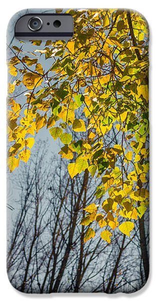 Fall Bushes iPhone Cases - Yellow Leaves iPhone Case by Carlos Caetano