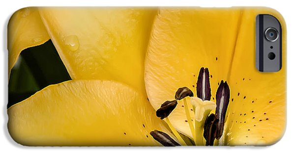 Close Up Floral iPhone Cases - Yellow Lily iPhone Case by Scott Norris