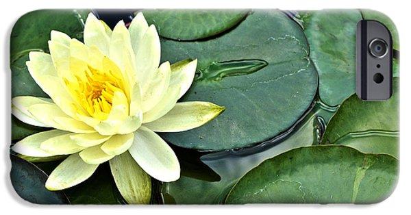 Botanical Photographs iPhone Cases - Yellow Lotus - Botanical Art by Sharon Cummings iPhone Case by Sharon Cummings