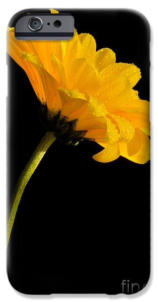 Bloosom iPhone Cases - Yellow On Black iPhone Case by Nick  Boren