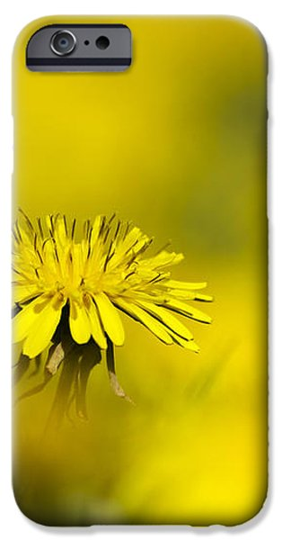 Yellow on Yellow Dandelion iPhone Case by Christina Rollo