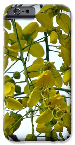 Plant iPhone Cases - Yellow orchids in frame iPhone Case by Zina Stromberg