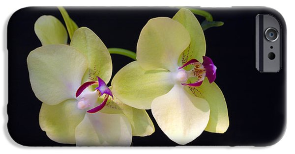 Michelle iPhone Cases - Yellow Orchids iPhone Case by Michelle Wiarda