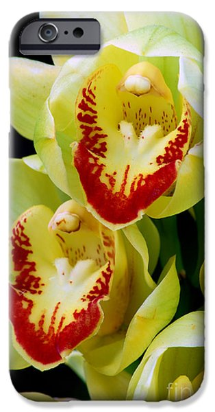 Close Up Pyrography iPhone Cases - Yellow Orchids iPhone Case by Nancy Mueller