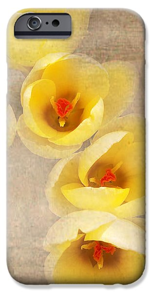 Yellow Petals iPhone Case by Kathi Mirto