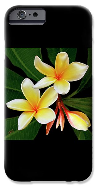 Brg iPhone Cases - Yellow Plumeria iPhone Case by Ben and Raisa Gertsberg