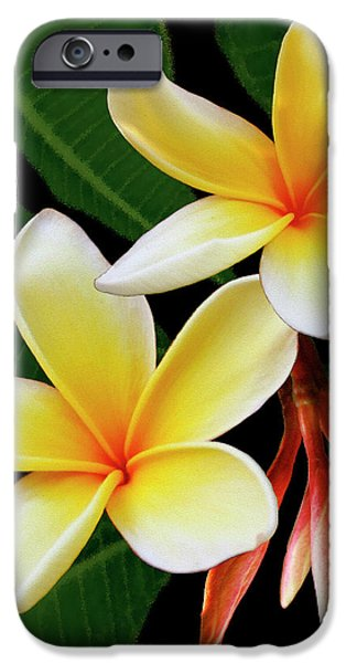 Best Sellers -  - Floral Digital Art Digital Art iPhone Cases - Yellow Plumeria iPhone Case by Ben and Raisa Gertsberg