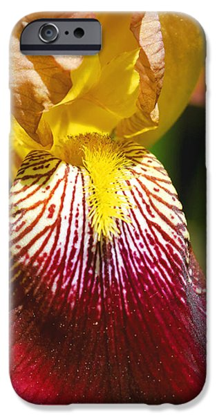 Yellow Bearded Iris iPhone Cases - Yellow Red Iris Flower iPhone Case by Keith Webber Jr