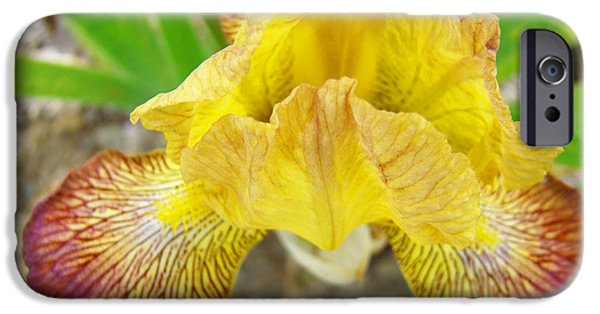 Yellow Bearded Iris iPhone Cases - Yellow Red Iris Flowers Art Prints Irises iPhone Case by Baslee Troutman Floral Art Prints