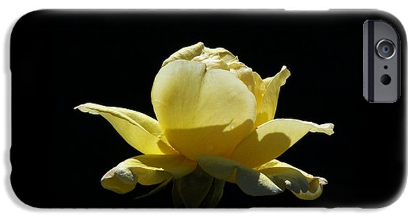 Close Up Floral iPhone Cases - Yellow Rose iPhone Case by Ernie Echols