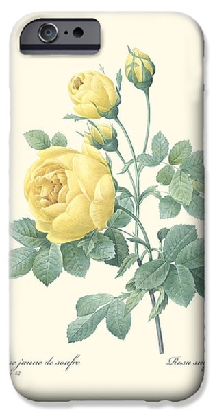 Digital Paintings iPhone Cases - Yellow Rose iPhone Case by Gary Grayson