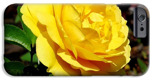 Floral Photographs iPhone Cases - Yellow rose III iPhone Case by Zina Stromberg
