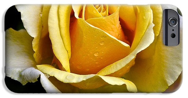 Botanical Photographs iPhone Cases - Yellow Rose With Dewdrops iPhone Case by Venetia Featherstone-Witty