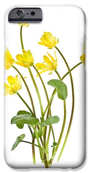 Flora Photographs iPhone Cases - Yellow spring wild flowers marsh marigolds iPhone Case by Elena Elisseeva