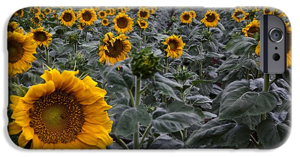 Rainy Day iPhone Cases - Yellow Sunflower Field iPhone Case by Dave Dilli