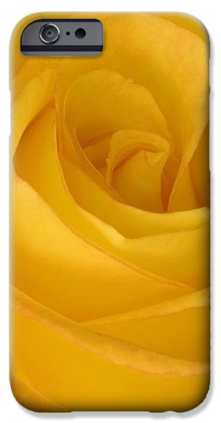 Yellow Tea Rose iPhone Case by John Pitcher