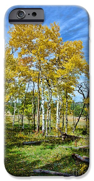 Yellow Tree iPhone Case by Keith Ducker