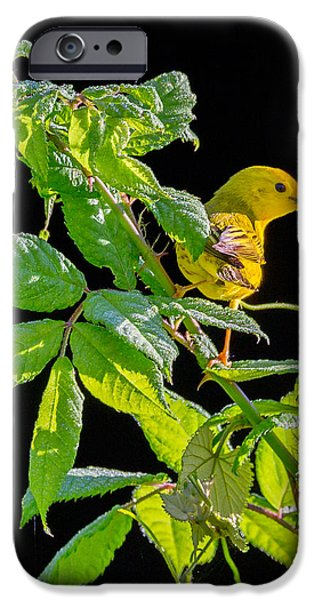 Warbler iPhone Cases - Yellow Warbler iPhone Case by Bill  Wakeley