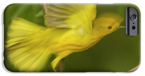 Warbler iPhone Cases - Yellow Warbler Male Taking Flight iPhone Case by Tom Vezo