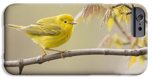 Warbler iPhone Cases - Yellow Warbler iPhone Case by Mircea Costina Photography