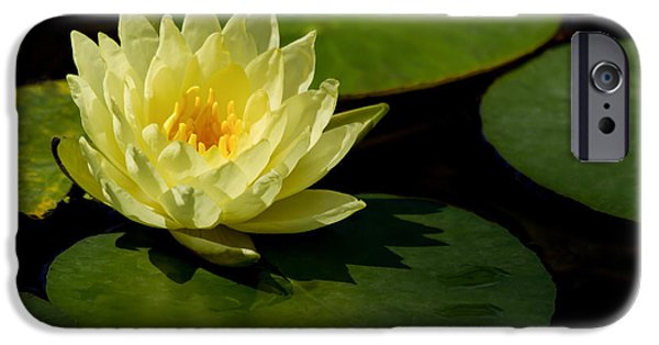 Florida Flowers Photographs iPhone Cases - Yellow Water Lily Sitting Pretty iPhone Case by Sabrina L Ryan