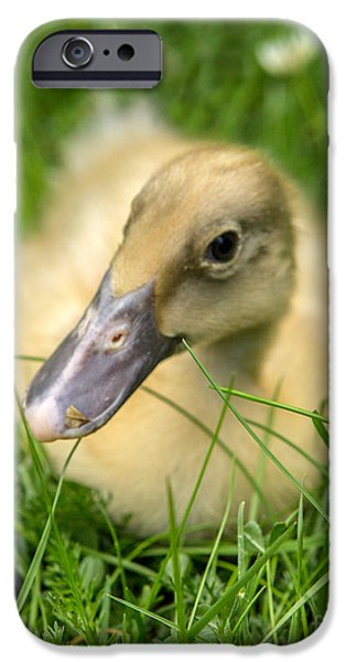 Duckling Photography iPhone Cases - Yellow Wingless Duckling iPhone Case by Iris Richardson