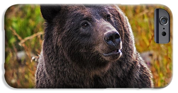 Fall iPhone Cases - Yellowstone Griz iPhone Case by Mark Kiver