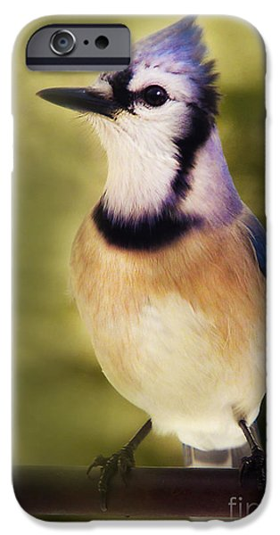 Bluejay iPhone Cases - Yes iPhone Case by Arnie Goldstein