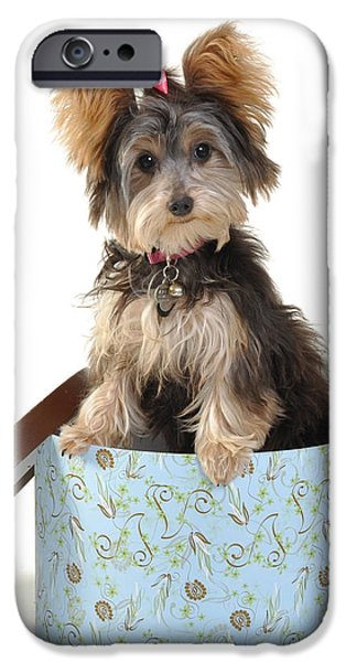 Cute Puppy iPhone Cases - Yorkie in Hatbox iPhone Case by Rebecca Brittain