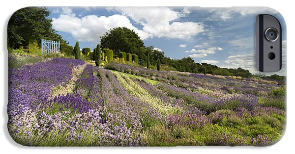 Vale iPhone Cases - Yorkshire Lavender iPhone Case by John Potter