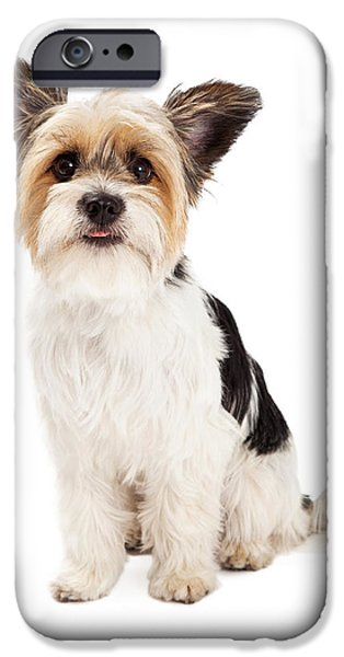 Yorkshire Terrier iPhone Cases - Yorkshire Terrier and ShihTzu Crossbreed Sitting iPhone Case by Susan  Schmitz