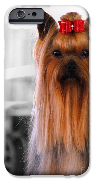 Tiny Dogs iPhone Cases - Yorkshire Terrier iPhone Case by Jai Johnson
