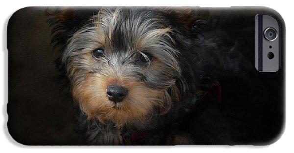 Black Dog iPhone Cases - Yorkshire Terrier Puppy Portrait iPhone Case by Jai Johnson