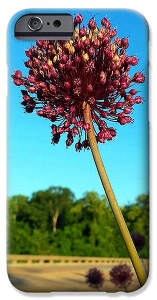 Yorktown iPhone Cases - Yorktown Onion Gracing the Parkway iPhone Case by Nancy Comley