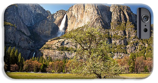 River View iPhone Cases - Yosemite meadow with tree iPhone Case by Jane Rix