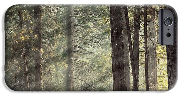 Park Scene iPhone Cases - Yosemite pines in sunlight iPhone Case by Jane Rix