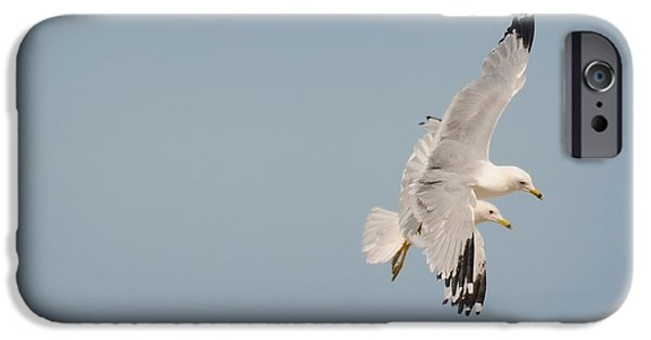 Flying Seagull iPhone Cases - You and Me iPhone Case by Diana Angstadt