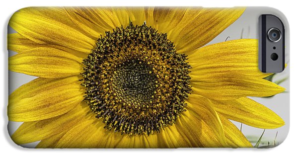 Colorful Sunflower iPhone Cases - You Are My Sunshine iPhone Case by Thomas Young