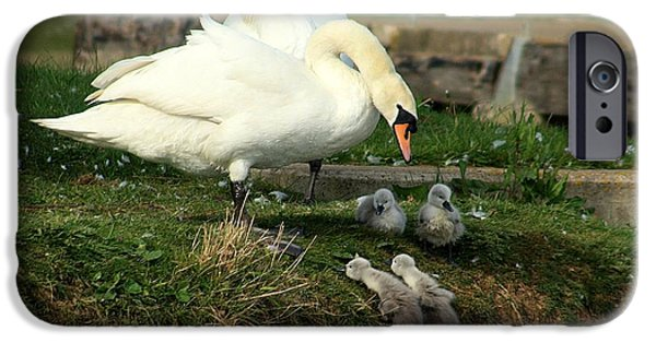 Swans... iPhone Cases - You Can Do It iPhone Case by Linsey Williams